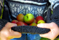 slogging apples